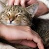 Домашняя кошка способна сломать психику
