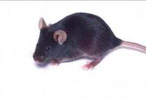 Возможно, воздействие свинца на организм может быть связано с шизофренией