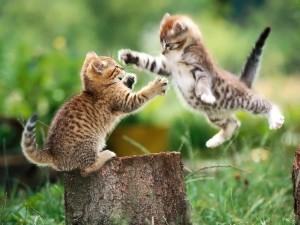 Видео с кошками избавляет от психических болезней