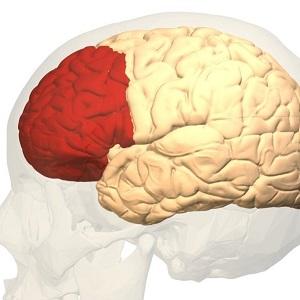 Названы части мозга, ответственные за нарушения памяти при шизофрении