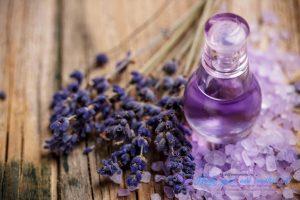 Определен механизм успокоительного воздействия запаха лаванды